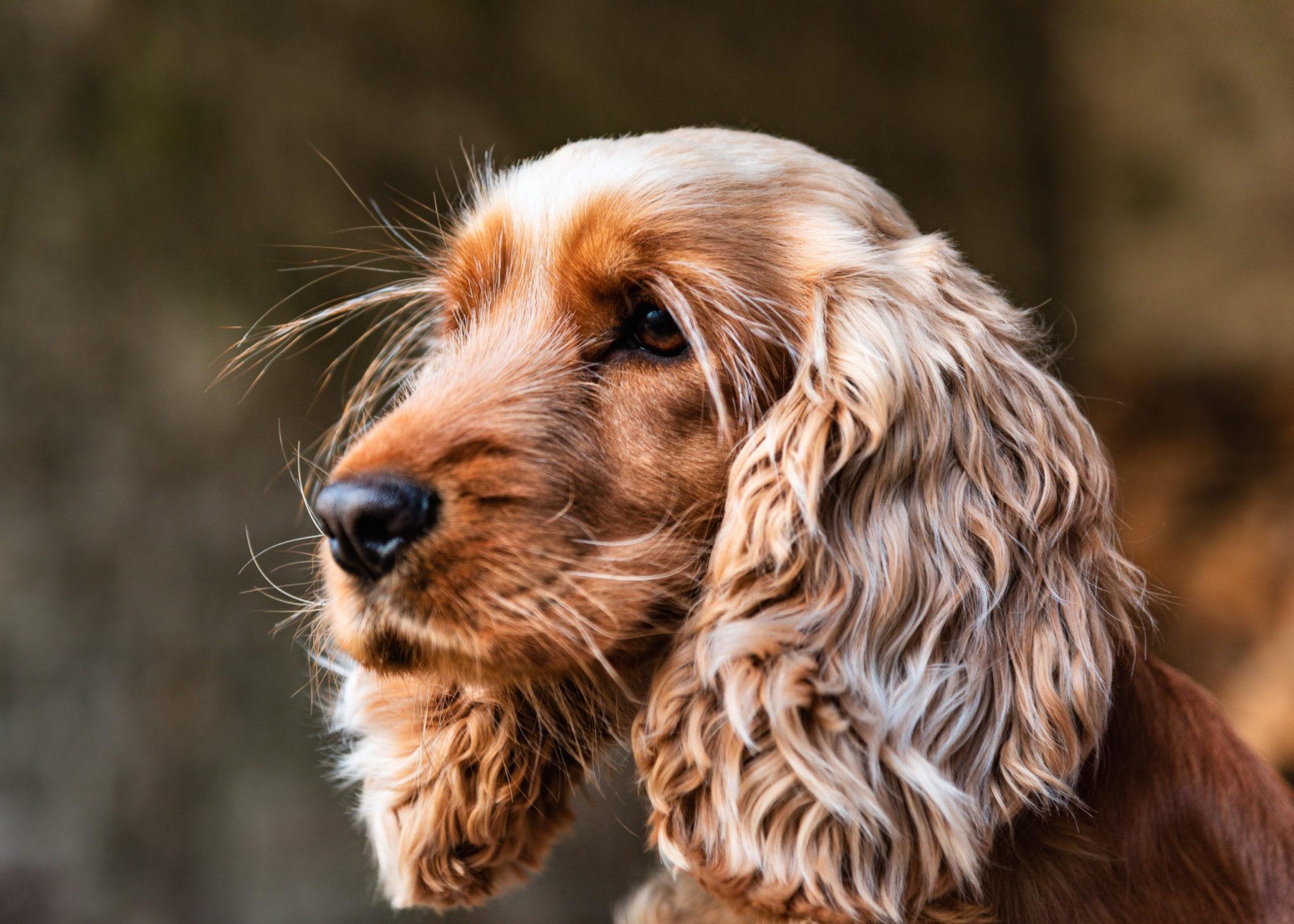 Dog Photographer Edinburgh | Pet Photography